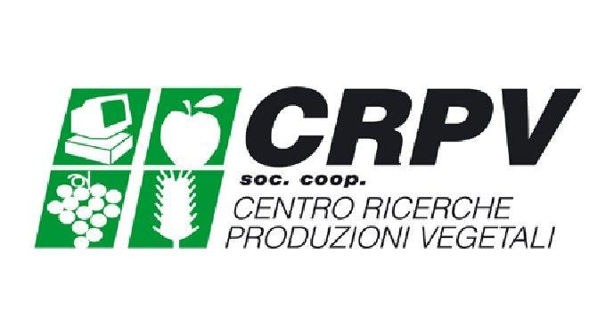 C.R.P.V