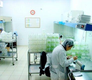 Εργαστήριο Ιστοκαλλιέργειας