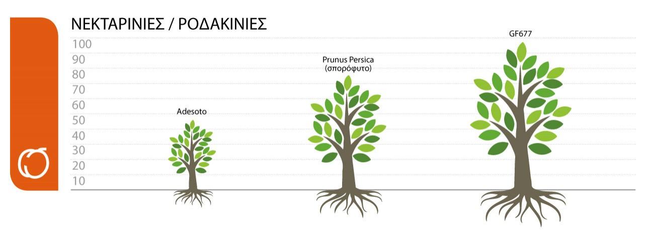 ypokeimena-nektarinies-rodakinies.jpg