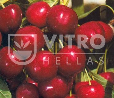 Ferrovia - Cherries