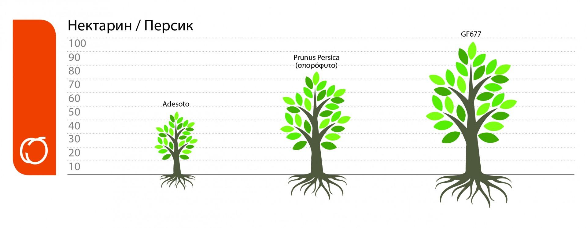 ypokeimena-nektarinies-rodakinies-ru.jpg