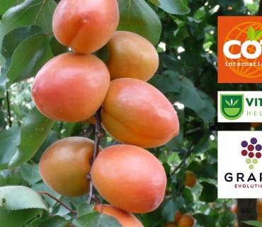 Σε νέα εποχή εισέρχονται οι ποικιλίες της COT International στην Ελλάδα